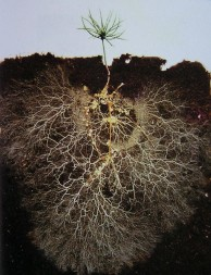 theatlantic.com/...healthy-soil-microbes-healthy-people