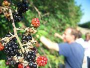 small_active-date-ideas-fruit-picking[1]